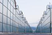 Industrial greenhouse endless glass window row — Stock Photo