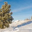 Hoar frost covered pine tree winter snow landscape — Stock Photo #37348755