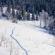 Snowy winter wonderland taiga snowshoe track scene — Stock Photo