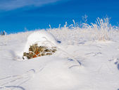 Rocky tundra hill snow covered winter wonderland — Stock Photo