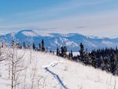 Taiga snowshoe path winter landscape Yukon Canada — Stock Photo