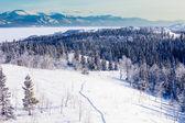 Snowshoe taiga trail landscape Yukon T Canada — Stock Photo