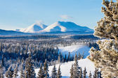 Taiga winter snow landscape Yukon Territory Canada — Stock Photo