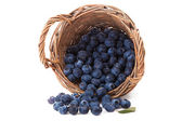 Blueberries in wooden basket isolated over white — Stock Photo