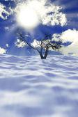 Dry tree in snow — Stock Photo