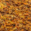 Autumn leaves on ground — Stock Photo