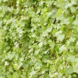 Stock Photo: Small leaves