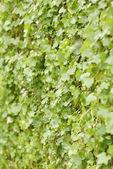 Petites feuilles — Photo