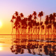 Stock Photo: Coconut palms at sunset