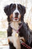 Dog champion — 图库照片