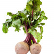Beet root (Beta vulgaris) — Stock Photo