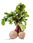 Beet root (Beta vulgaris) — Stock Photo