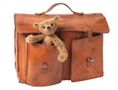 Briefcase and Teddy Bear — Stock Photo