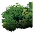 Shrub — Stock Vector