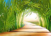 Boschetto di bambù — Foto Stock
