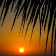Maldivian Sunset — Stock Photo