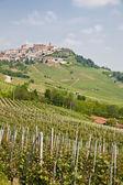 Winnica w toskanii — Zdjęcie stockowe