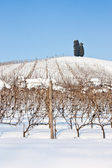 Tuscany: wineyard in winter — Stock Photo