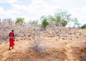 Masai in savanna — Stock Photo