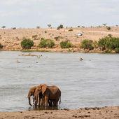 Safari in Kenya — Stock Photo