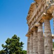 Stock Photo: Paestum temple - Italy