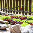 Vegetable Garden - Stockfoto