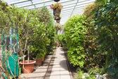Greenhouse interior — Stock Photo