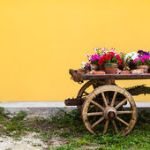 Tuscany flowers — Stock Photo