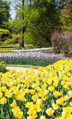 Tulips garden — Stock Photo
