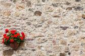 トスカーナの花 — ストック写真