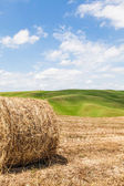 Tuscany agriculture — Stock Photo