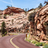 Road in Zion — Stock Photo