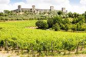 Wineyard in Tuscany — Stock Photo