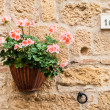 Tuscan flowers — Stock Photo #34631693