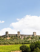 Wineyard in Tuscany — Stock Photo