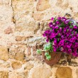 Stock Photo: Tuscflowers