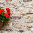 Tuscan flowers — Stock Photo #35563297