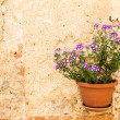 Tuscan flowers — Stock Photo