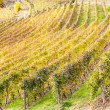 Italian Vineyard — Stock Photo