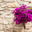 Tuscan flowers — Stock Photo #37689377