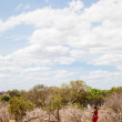 Foto Stock: Masai in savanna