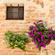 Tuscan flowers — Stock Photo #38636495