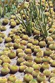Cactus Garden — Stockfoto