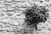 тосканской цветы — Стоковое фото