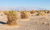 Death Valley Desert — Stock Photo