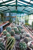 Cactus greenhouse — Stock Photo