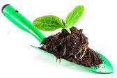 Young plant on gardening tool — Zdjęcie stockowe