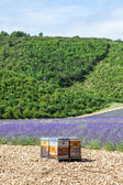 Beehive close to lavander field — Stock Photo