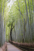 Bamboo Grove, Arashiyama, Kyoto — Stock Photo
