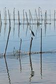 Birds in La Albufera, Valencia — Stock Photo